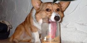 Perro intentando comer