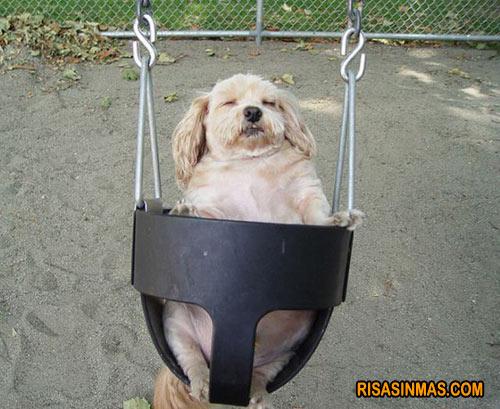 Perro columpiándose