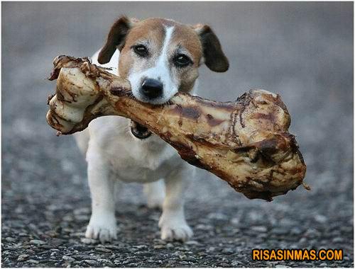 Perro con su huesecito
