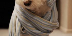 Perro friolero