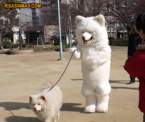 Perro paseando a un perro