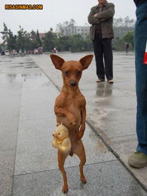 Perro dando un paseo