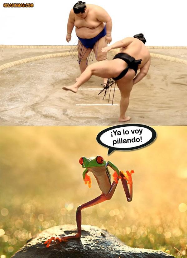 Rana entrenando Sumo