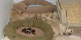 Perritos y camas