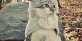 Disfraces gatunos: de Cabra