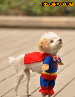 Disfraces perrunos: Superman