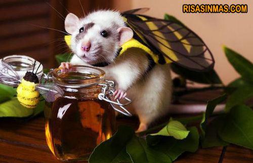 Soy una abeja, soy una abeja...