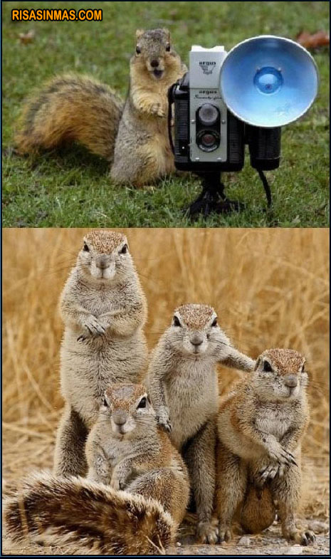 Ardilla fotógrafa