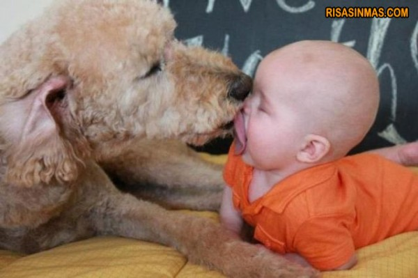 Beso entre un perro y un bebé