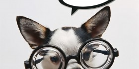 Chihuahua con gafas
