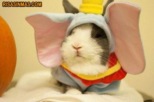 Cobaya disfrazada de Dumbo