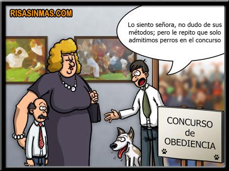 Concurso de obediencia