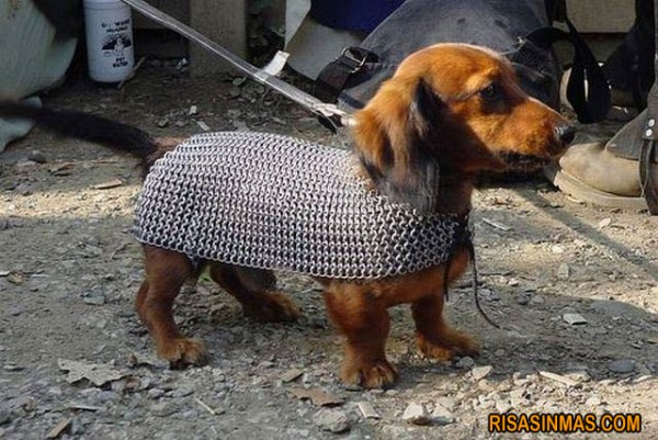 Disfraces perrunos: Gladiator