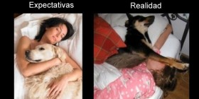 Durmiendo con mascotas