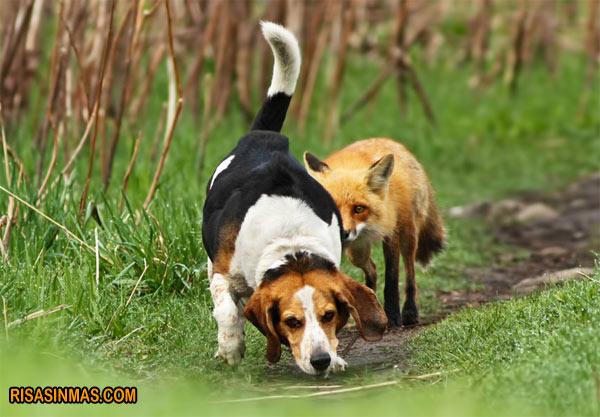 El peor perro de caza del mundo