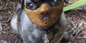 El perro de Hannibal Lecter