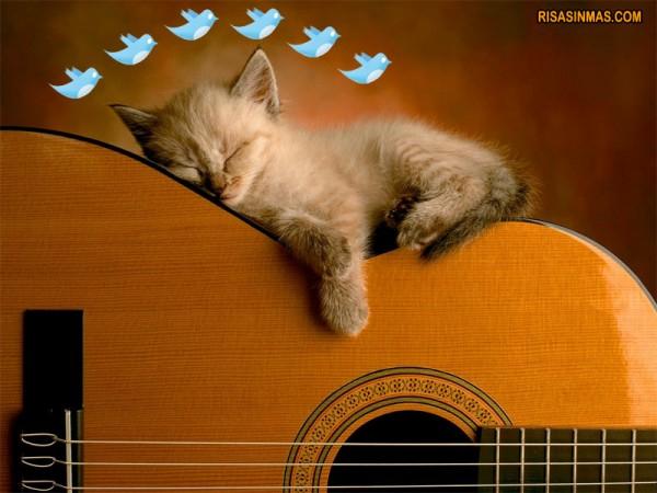 Gatito soñando con pajaritos