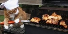 Gato cocinero