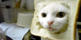 Gato disfrazado de tostada