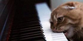 Gato cansado de la música del piano
