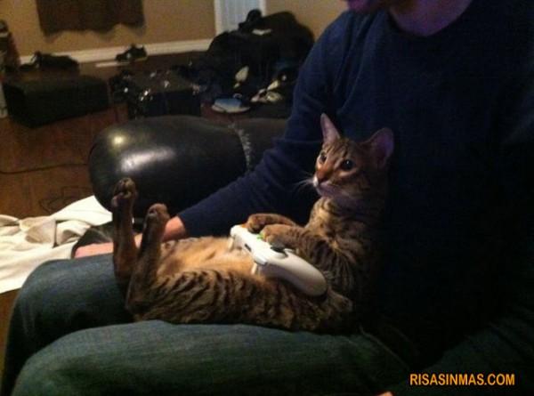 Demostrado: a los gatos les gustan los videojuegos