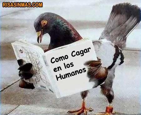 Lecturas de palomas