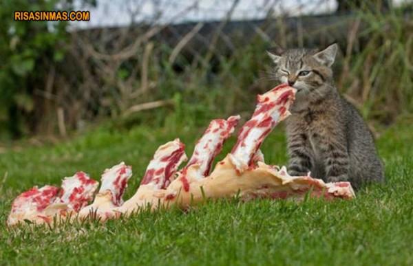 ¡Mira mamá lo que he cazado!