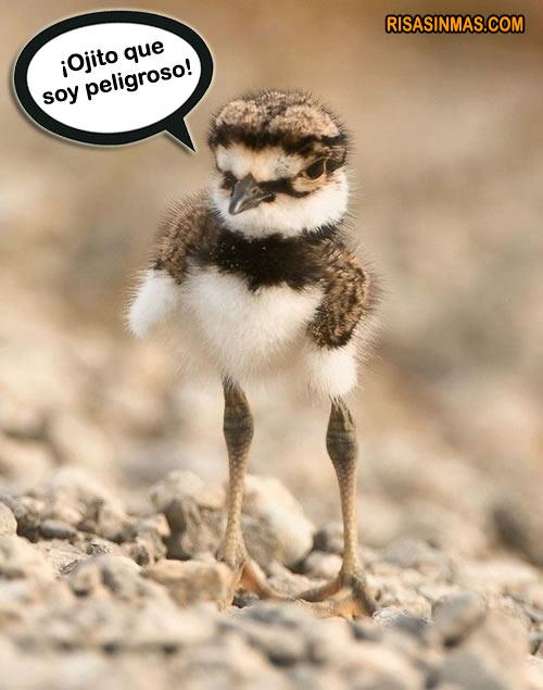 Pájaro peligroso