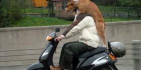 Paseo en moto...