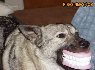 Perro con una dentadura...