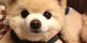 Perro con lacito