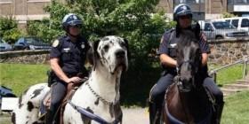 ¿Policías a caballo?