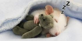 Ratón soñando