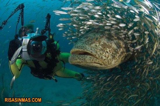 Fotobomba marina