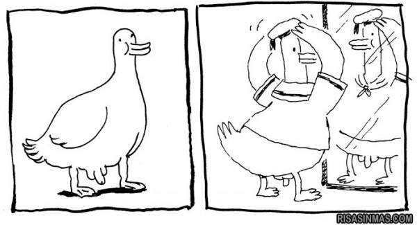 Un pato bien vestido