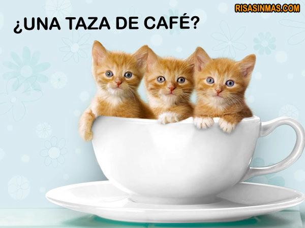 ¿Una taza de café?