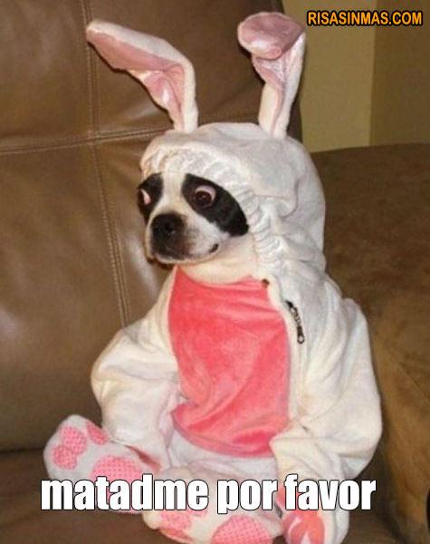 Disfraces perrunos: Conejo