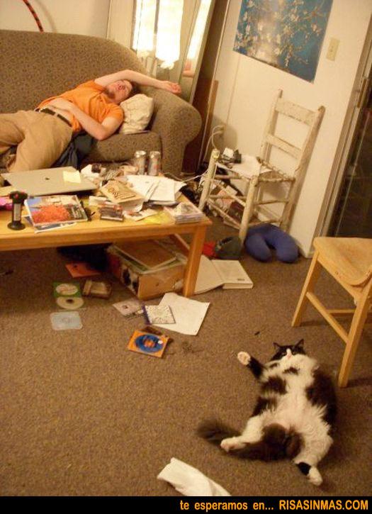 Simbiosis entre el hombre y el gato