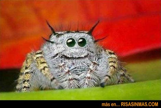 ¿Quién ha dicho que las arañas no son divertidas?