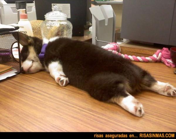 Cachorro durmiendo la siesta