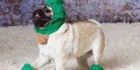 Disfraces perrunos: Árbol de Navidad
