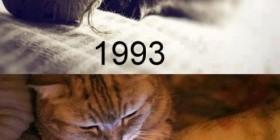 Evolución del juguete del gato