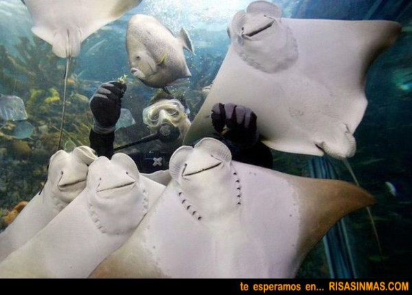 Familia feliz de peces raya