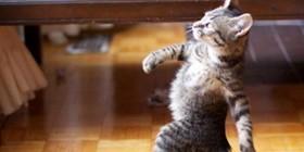 Gatito paseando