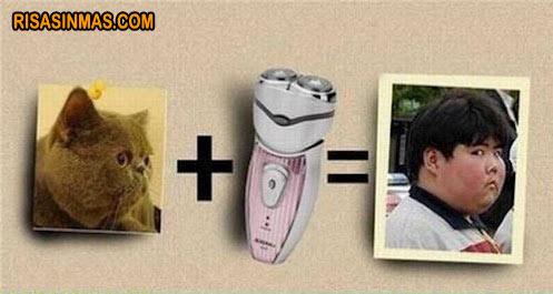 Gato afeitado