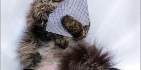 Gato con cara de