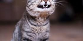 Gato sonriendo