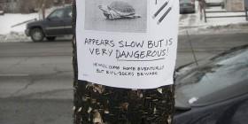 Perdidos: Tortuga y nunchakus
