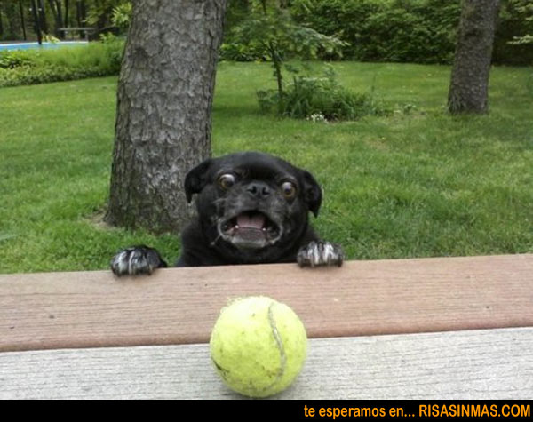 ¡Oh dios, mi pelota!
