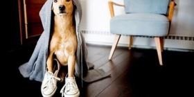 Perro preparado para hacer footing